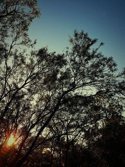 Morning walk 😊