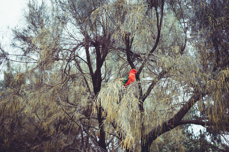 EyeEm Nature Lover Red Bird Adventure Bare Tree Beauty In Nature Branch Day Forest Full Length Land Leisure Activity Lifestyles Men Nature One Person Outdoors Parrot Parrot Lover Plant Real People Scenics - Nature Tranquility Tree