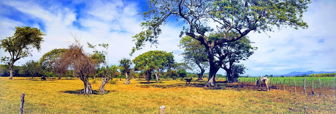 Beauty In Nature Branch Cloud - Sky Day Field Grass Growth Landscape Nature No People Outdoors Scenics Sky Tranquil Scene Tranquility Tree Tree Trunk