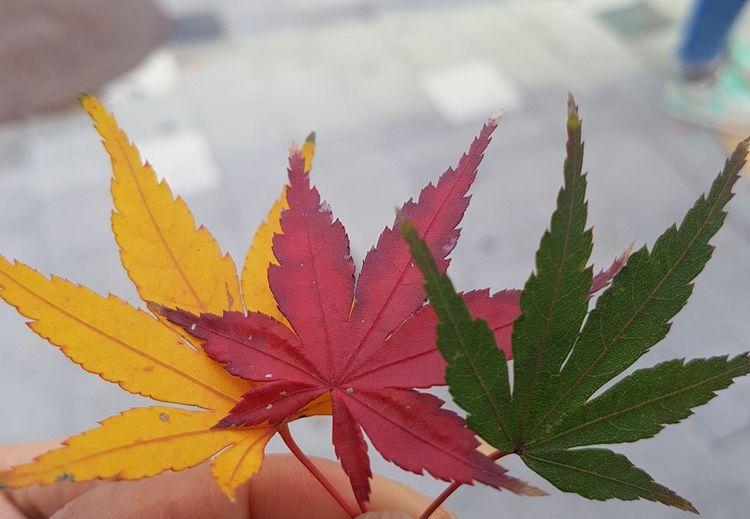 tricolors
