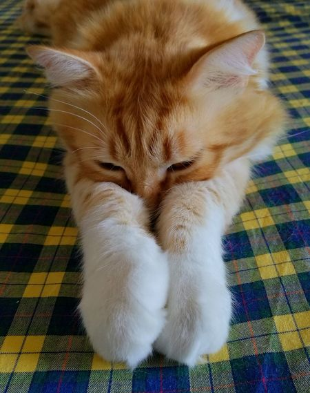 Domestic Cat Pets One Animal Domestic Animals Feline Animal Themes Mammal Indoors  Low Section Close-up Animal Leg No People Day