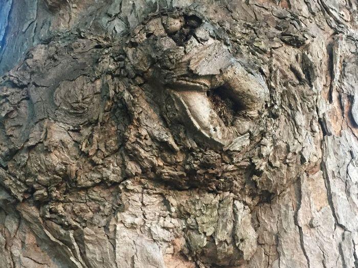 Bark Bark Texture Knotted Wood Nature Textured  Tree Tree Image Tree Trunk