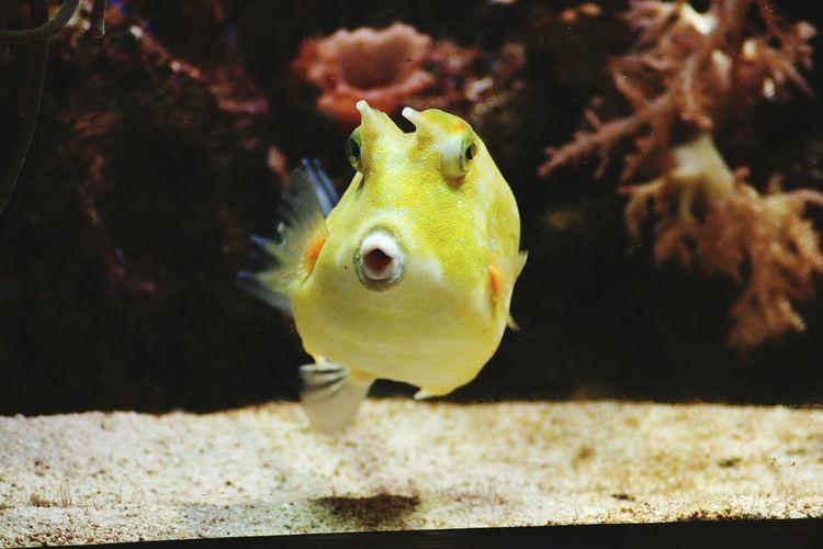 Boxfish Kofferfisch Sea Life EyeEm Best Shots EyeEmBestPics