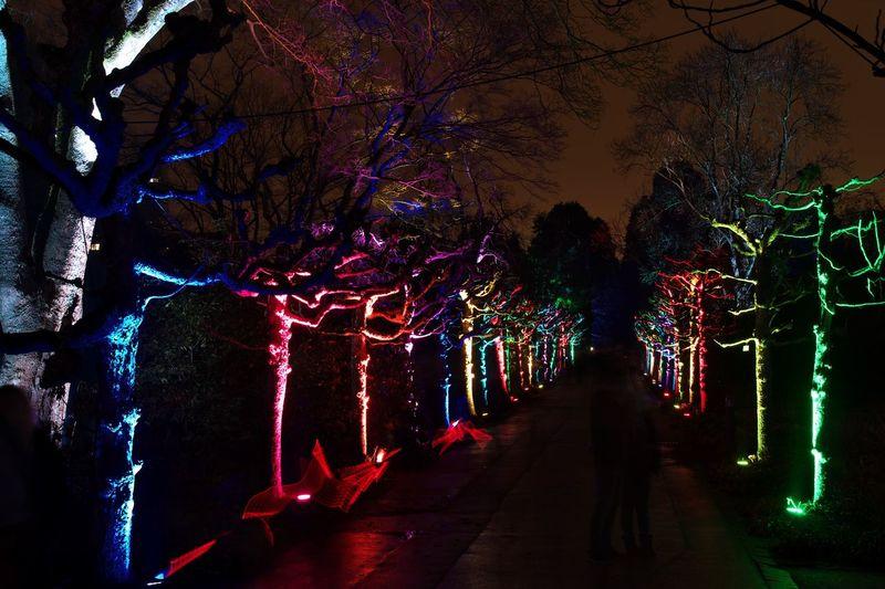 Illuminated Night Tree Road Lighting Equipment Available Light Outdoors Nightphotography Light Effect No People Multicolors  Multi Colored Tree Long Exposure LongTerm Parkleuchten Grugapark Essen Germany