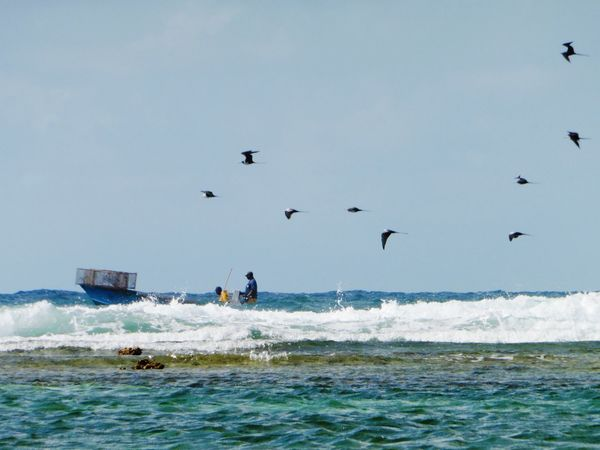 Mer Gwada  Bateaux Peche Hollidays The Great Outdoors With Adobe Sea And Sky Birds Blue The Essence Of Summer Miles Away