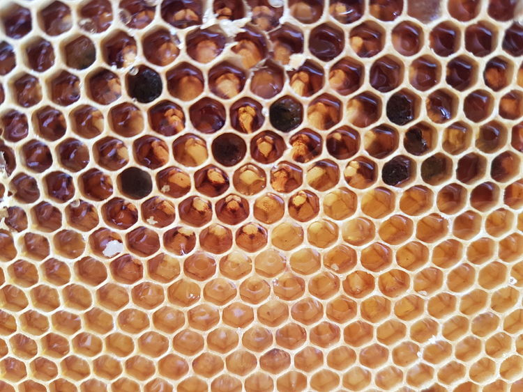 Honeycomb Beehive Pattern No People Close-up Backgrounds Full Frame Day APIculture Indoors  Nature Animal Themes Honey Suckle Bee 🐝 Bees And Flowers Bees Nature HoneyBee Honey ❤ Summer Summertime Beautiful Animals In The Wild