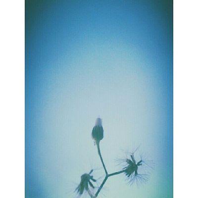 """Descarte aquela frase """"nunca diga nunca"""". Diga sim. Diga: Nunca pare de sonhar. Nunca deixe de amar. Nunca deixe de acreditar, ter fé e esperança. Nunca viva em vão. Nunca fique triste por uma mudança. Nunca deixe de errar. Nunca deixe de viver. Diga, grite, esperneie por aí a palavra nunca. Mas sempre posta numa frase que vai te levar pra cima, pra frente, pra sempre. -Pequeno Sonhador. Pequenosonhador Vida Céu Natureza"""