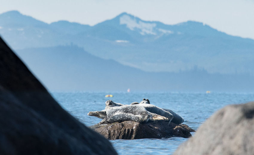 Seals on rock in sea