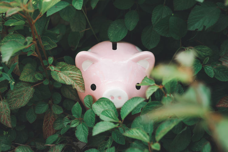 Close-up of piggy bank by plants
