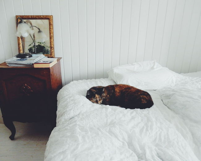 Bedroom White Room Bed White Sleeping Cat Sleeping Beauty Pets Feline Pet Sleep Cat Sleep Time My Favorite Place Pet Portraits