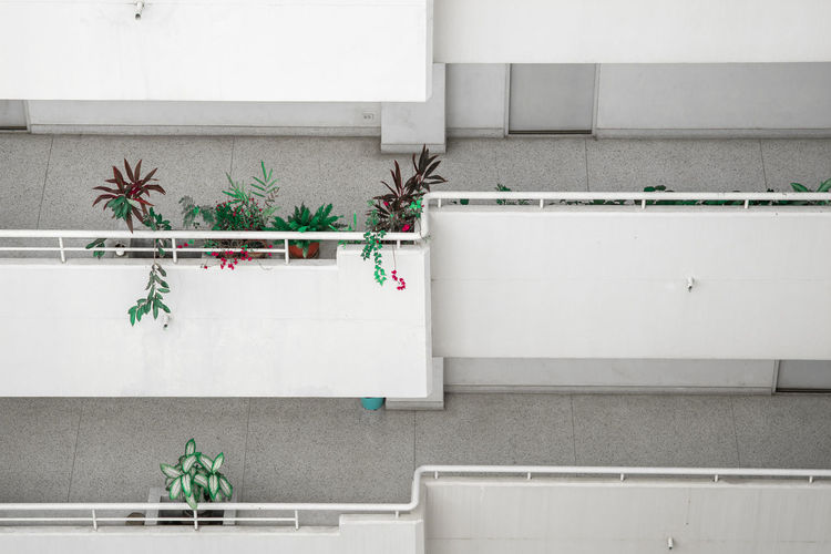 Potted plants against wall at home