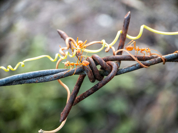 Close-up of flower buds on branch