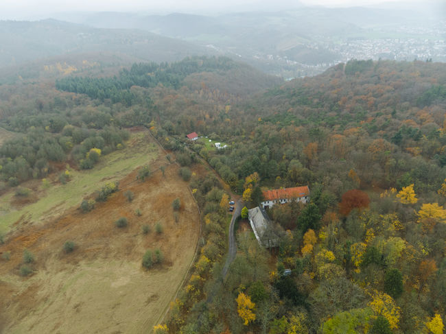 Nature Trees Copterphotography Fall Leafes No People