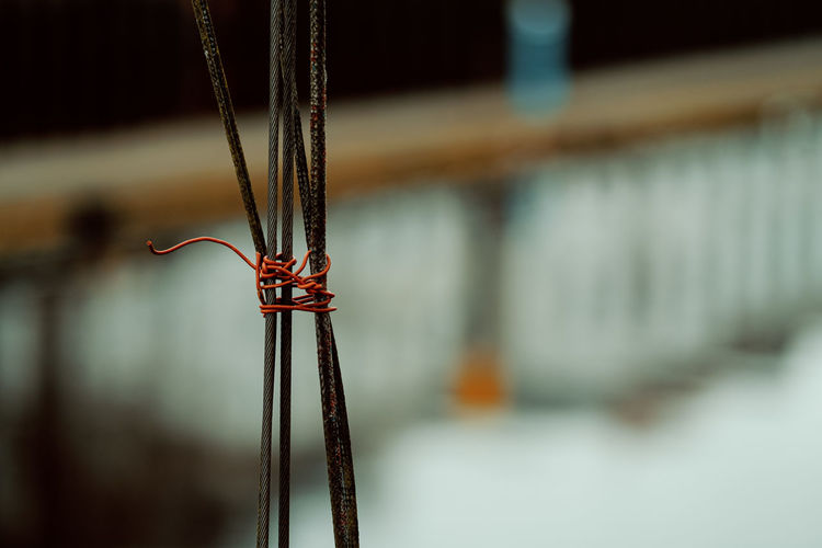 Close-up of insect hanging on metal