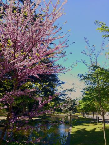 Tbilisi Spring Expo Georgia