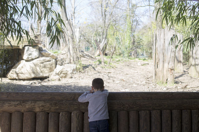 Zoo Child Childhood Contemplation Innocence Leisure Activity Nature Offspring One Person Real People Rear View Three Quarter Length Tree