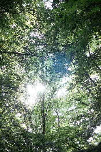 Auszeit an der Ostsee Backgrounds Beauty In Nature Branch Day Directly Below Foliage Forest Full Frame Green Color Growth Land Low Angle View Lush Foliage Nature No People Outdoors Plant Rainforest Sunlight Tranquility Tree Tree Canopy