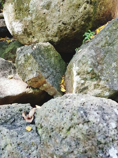 rocks Rock -