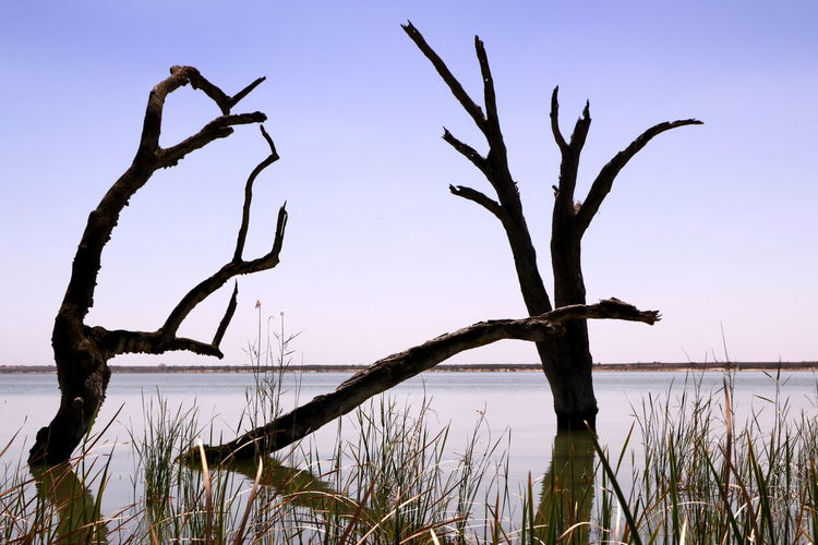 Bare tree by lake against clear sky