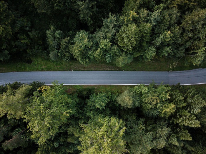 Plant Tree Green Color No People Growth Forest Nature Day Beauty In Nature Land Transportation Outdoors Road Scenics - Nature Tranquility Foliage Tranquil Scene Non-urban Scene Lush Foliage High Angle View