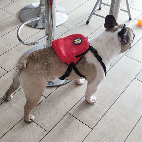 High angle view of dog standing on tiled floor