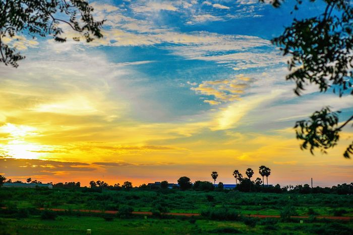Tree Tranquil Scene Landscape Scenics Sunset Tranquility Beauty In Nature Idyllic Nature Non-urban Scene Field Solitude Countryside Rural Scene Majestic Sky Outline Outdoors Cloud Cloud - Sky Nature Relaxing People And Places Photography Springtime