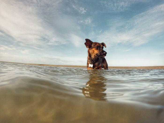 Dog in shallow water against sky