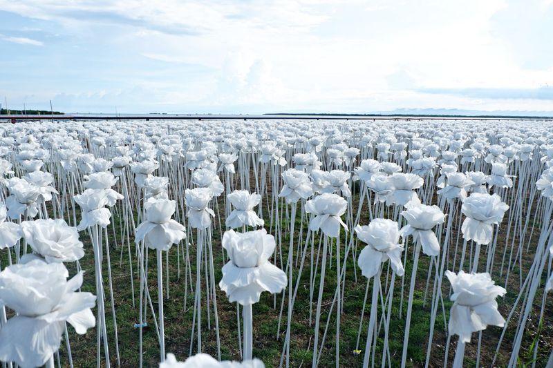 10,000 Blossoms