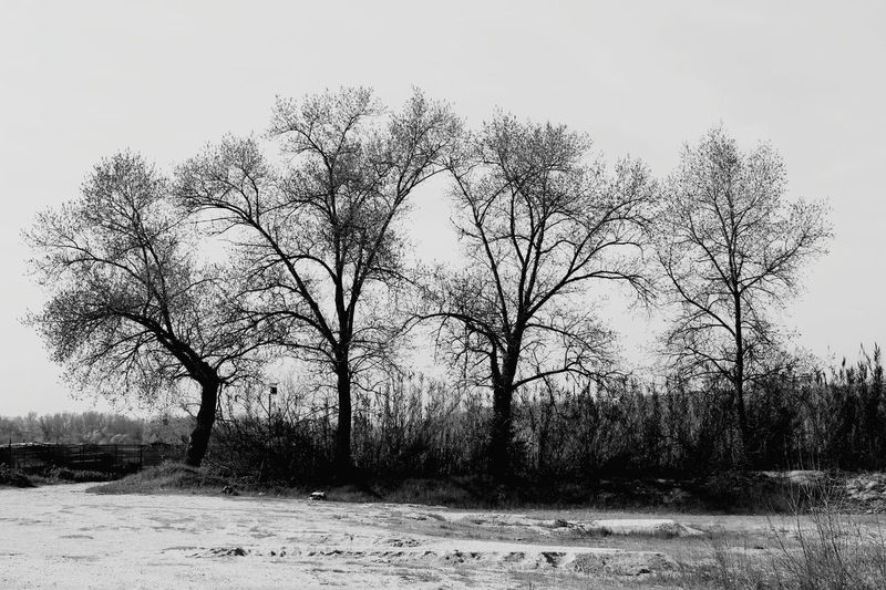 4 GUYS B&W EyeEmNewHere Nature Naturelovers Nature Photography Trees Tree Black And White Blackandwhite Tree Sky Landscape Bare Tree Single Tree Dead Plant Treelined Fallen Tree Dead Tree Tranquility Foggy Silhouette Tranquil Scene