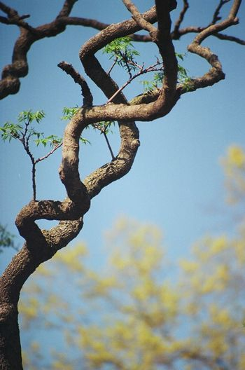 Close-up of branches
