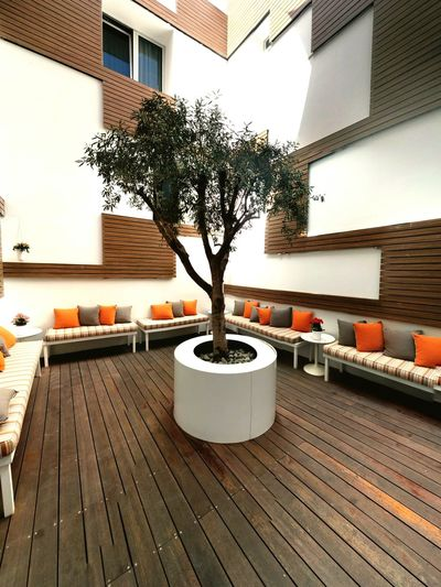 Open Sky Inner Courtyard Olive Tree Hardwood Floor