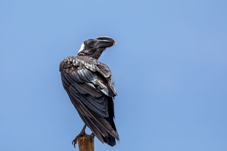 Low angle view of eagle perching on sculpture against sky