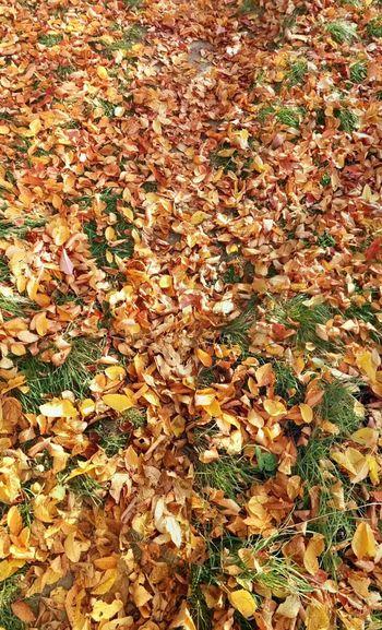 Leaves of gold Lvivgram Autumn Leaves EyeEm Best Shots - Autumn / Fall EyeEm Best Shots