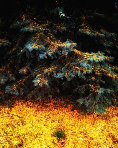 Beauty In Nature красиво Green Season  листья осень Season  No People Atmosphere Softness Botany Tree Season  Beauty In Nature дерево Осень 🍁🍂 желтое листья желтые лист листва Close-up Growth Multi Colored Nature Moss
