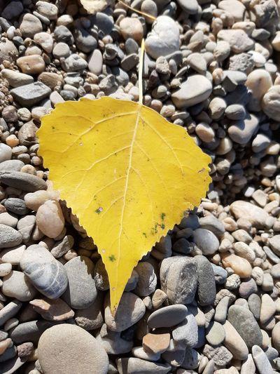 Beach Yellow