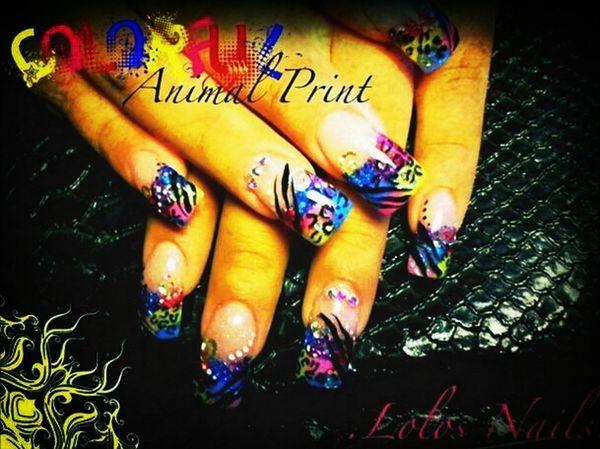Cheetah/zebra Print