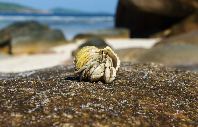 hermit crab Animal Wildlife Animal One Animal Animals In The Wild Close-up Hermit Crab Crustacean Crab Shell Day Nature No People Land Animal Shell Outdoors Selective Focus Marine Seychelles Inquisitive Animals Beach Beachphotography Wildlife