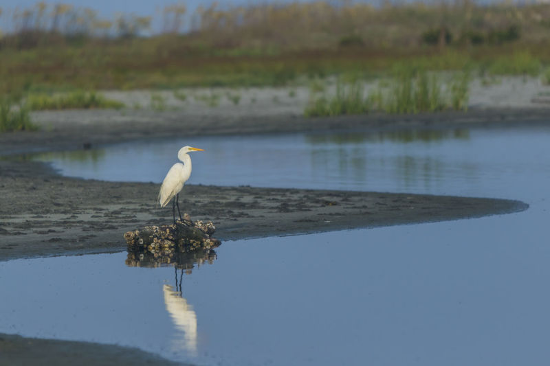 Bird perching on lake against sky
