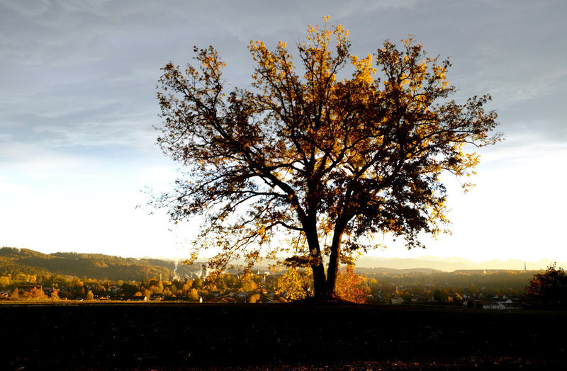 Tree Beauty In Nature Scenics - Nature Tranquil Scene Cloud - Sky Landscape Environment Autumn Sunlight Change Sunset Nature Schongau Onmywayhome