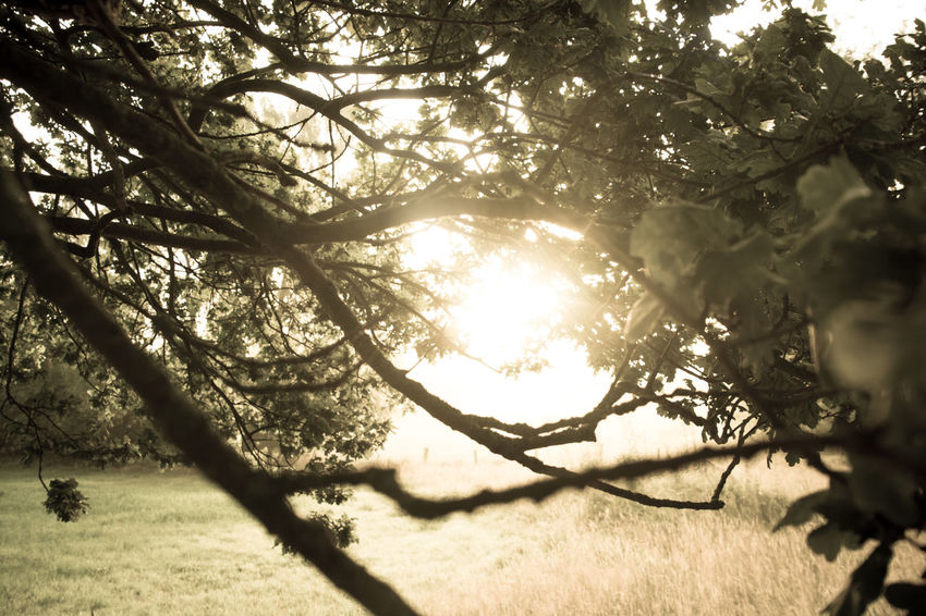 In The Morning Eye4photography  Photo Of The Day Eye4photography # Photooftheday