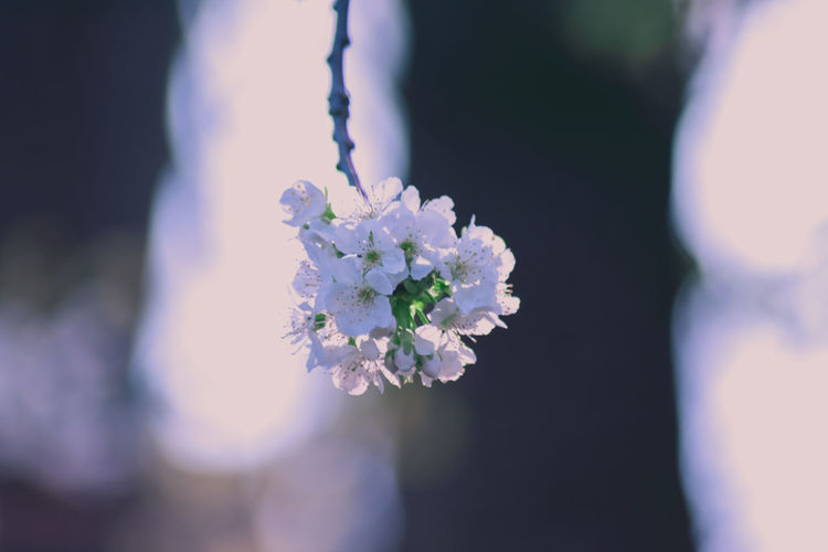 Beauty In Nature Close-up Day Flower Flower Head Fragility Freshness Nature One Person Outdoors People Petal White Color