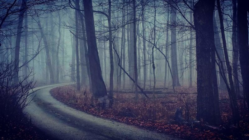 Foggy Spooky Forrest Creepy Woods Fall