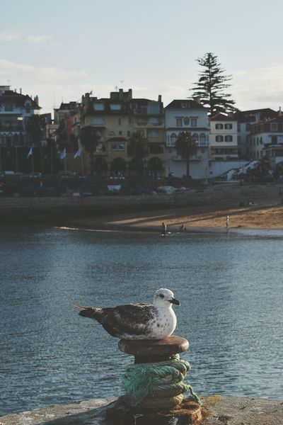 Alone looking at me. Day Calm Baía Cascais Cascais Cascais Portugal Seagull Seagull Serenity Seagulls In The City EyeEm Selects Water City Sea Beach Bird Cityscape Politics And Government Sky Architecture Building Exterior Residential District Fishing Tackle Residential Structure Harbor Dock TOWNSCAPE Fishing Industry Fishing Rod Fishing Net Residential Building Boat