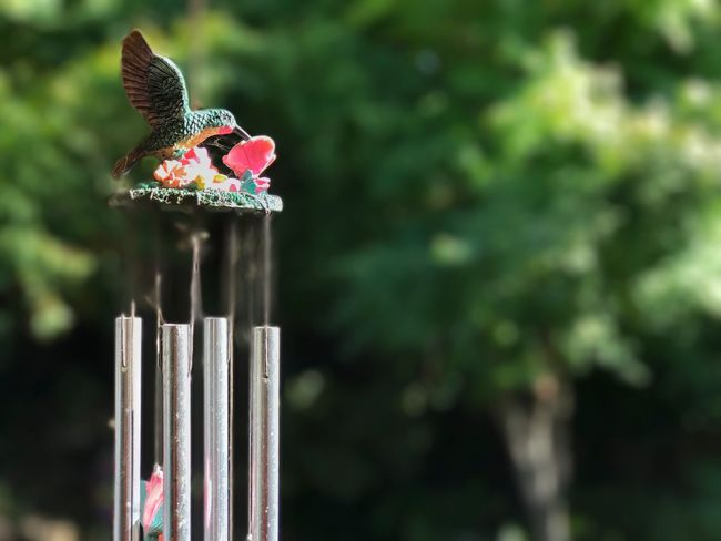 Hummingbird windchimes Animal Themes One Animal Animals In The Wild Focus On Foreground Bird Animal Wildlife Day Perching Outdoors No People Close-up Nature Beauty In Nature Windchimes Humingbird Bokeh Copy Space