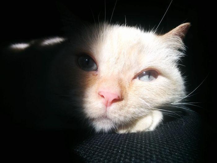 Cats Of EyeEm Closeup My Cute Kitty