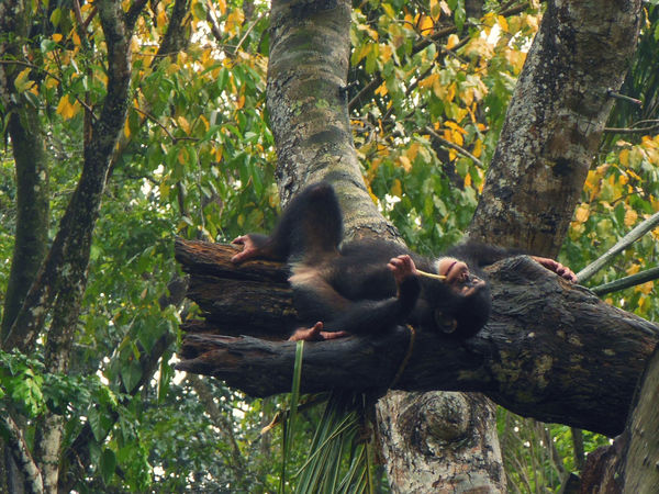 Animal Themes Chillin Enjoy Life Happy Monkey One Animal Primate Relax Relaxing Time Singapore Zoological Garden Way Of Life