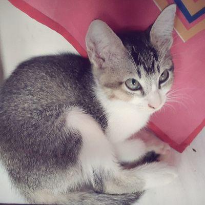 Domestic Cat Pets Feline No People Animal Themes Kitten Cute Kitten Kitten Adorable
