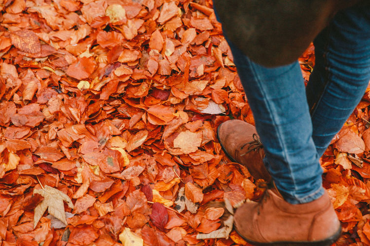 Low Section Of Person Walking On Orange Leaves