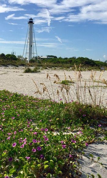 Lighthouse Beachphotography Flowers Nature