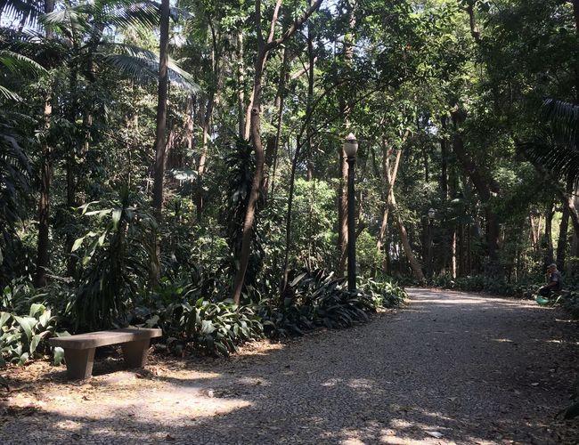 A espera Parque  Parque Trianon Park Way